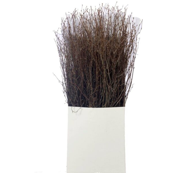 Dried Natural birch, 75cm