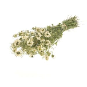 Nigella natural white