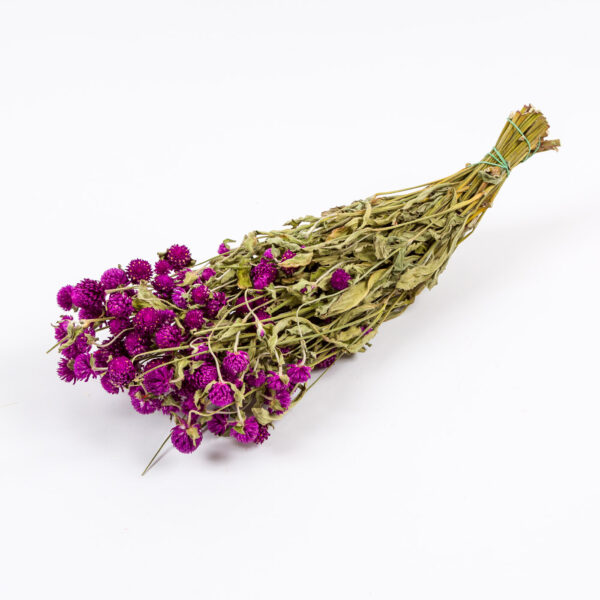 Dried Gomphrena purple
