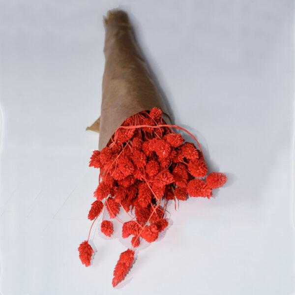 Dried Phalaris, Red, bunch