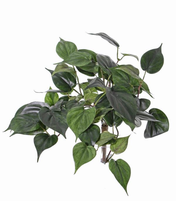 Philodendron Bush