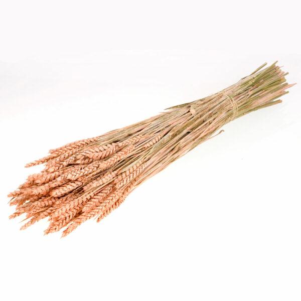 Tarwe (Wheat), Coral Misty
