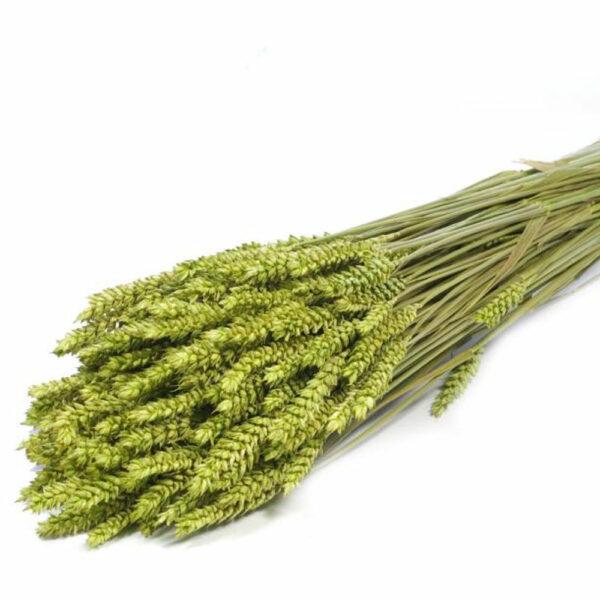 Tarwe (Wheat), Green