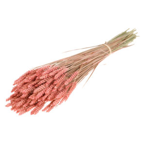 Tarwe (Wheat), Pink