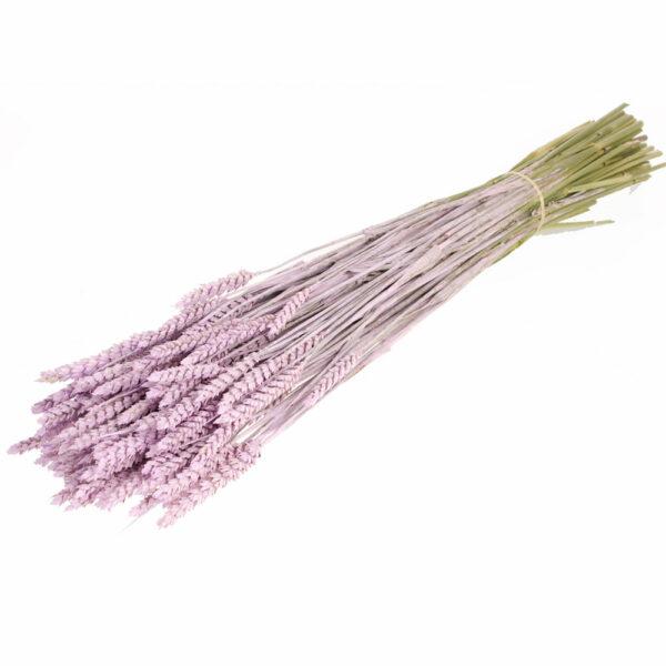 Tarwe (Wheat), Lilac Misty