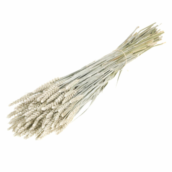 Tarwe (Wheat), White Misty Bunch