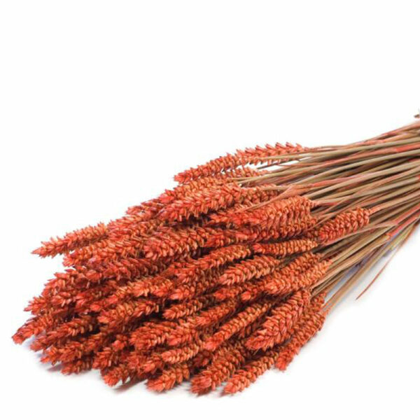 Tarwe (Wheat), Burnt Orange Bunch