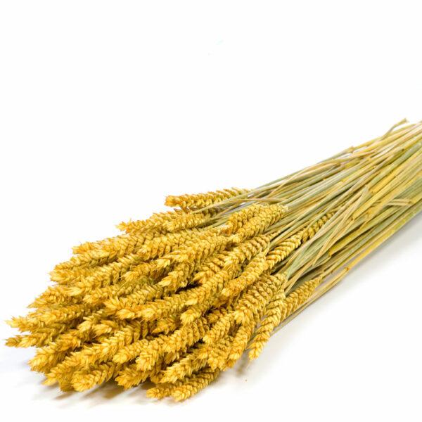 Tarwe (Wheat), Yellow Bunch