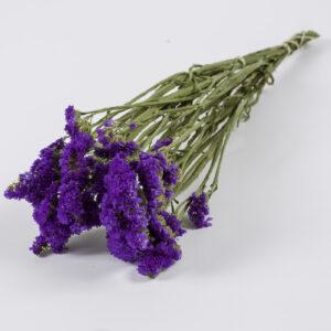 Statice Sinuata Dark Violet