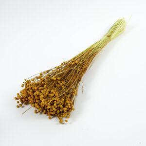 Flax, Linum, Orange