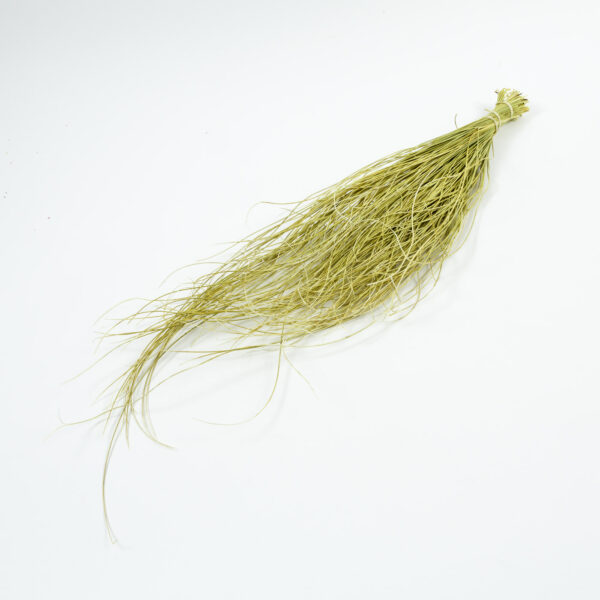 Dessert Grass, Bleached White