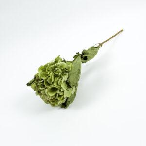 dried hydrangea xl