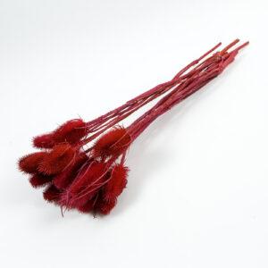 Marsh Thistle Red