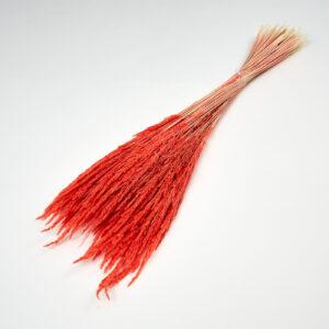 Piumetta Red