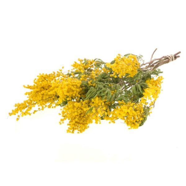 Mimosa myrandol natural yellow