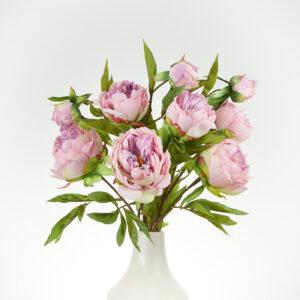 Peony Spring Dream Lilac