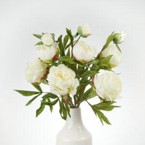 Peony Spring Dream, White
