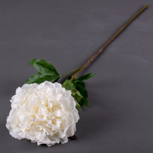 This image shows a large-variety, cream coloured faux peony, laid on a grey background.