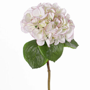 Hydrangea Sensitive, White/pink tip