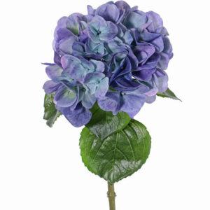 Hydrangea Sensitive, Lilac