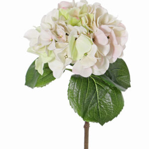 Hydrangea Sensitive, White/Pink