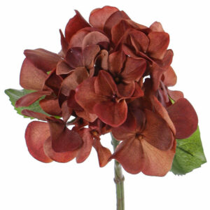 Hortensia (Hydrangea), Sensitive, Red/Brown