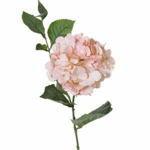 Hydrangea, Spring Dream, Light Pink