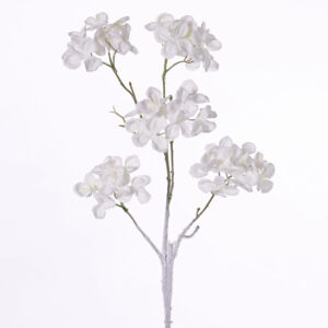 Hydrangea, Pastel Winter, White
