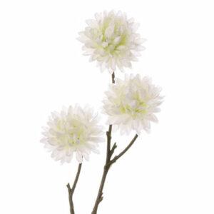Chrysanthemum Mini, Little Joy