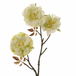 Wild Rose Twig, Little Joy