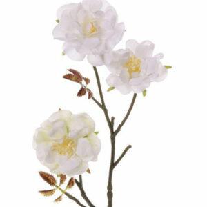 Wild Rose Twig, Little Joy, White