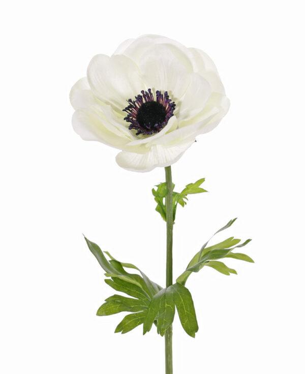 Anemone MIA, White