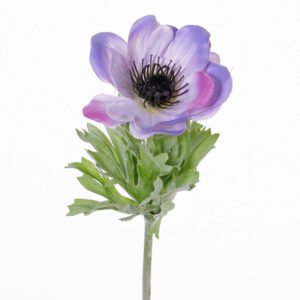 Anemone Lisa, Lilac