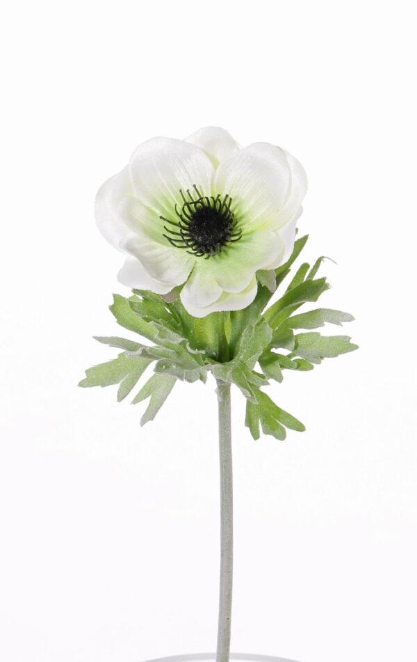 Anemone Lisa, White