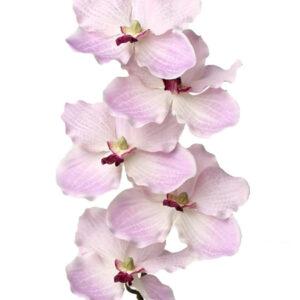 Vanda Orchid, Pink