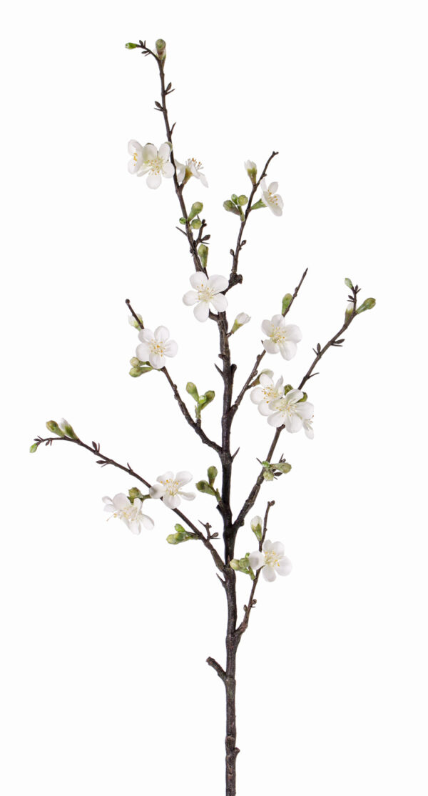 Apple Blossom Branch, Quince, Cream