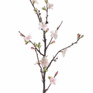 Apple Blossom Branch, Quince, Pink