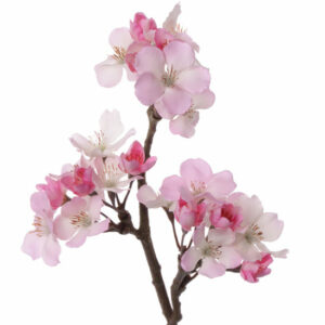 Apple Blossom, Short, Pink