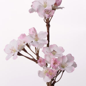 Apple Blossom, Short, White/Pink