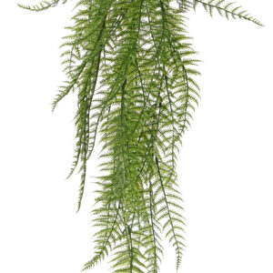 Woodwardia Fern