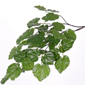 Cercis Branch