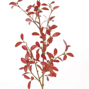 Privet Leaf Branch, Red