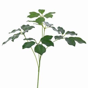 Schefflera Branch