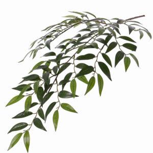 Smilax Branch