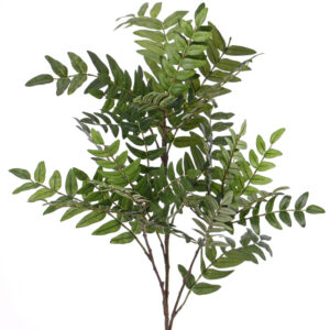 Sorbus Branch
