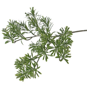 Artemisia Absinthum Spray