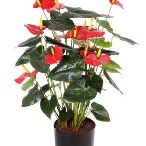 Anthurium Pot, Red