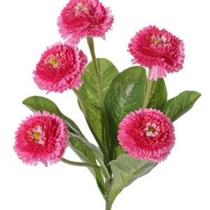 Bellis Perennis, Pink
