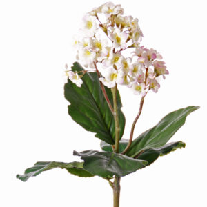 Bergenia Bush, Light Pink