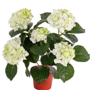 Hydrangea Pot, White/Green